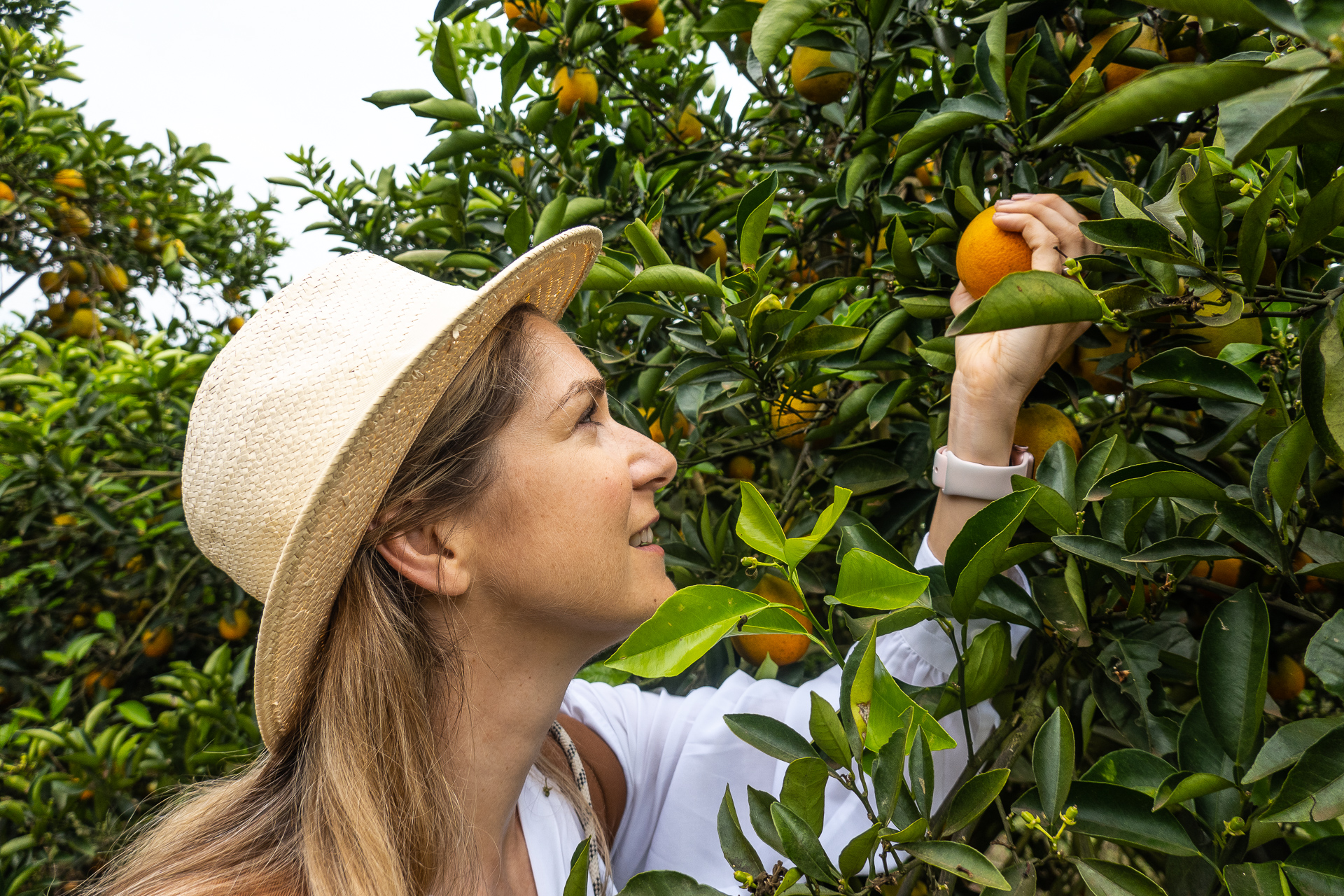 Brasilienreise - Faire Orangen Mrs Flury